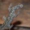 lizard pin